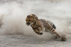 fast turn